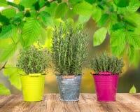 Ferramentas e ervas exteriores de jardinagem Fotos de Stock