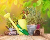 Ferramentas e ervas exteriores de jardinagem Foto de Stock