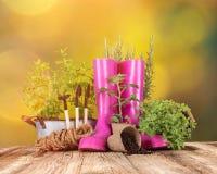 Ferramentas e ervas exteriores de jardinagem Foto de Stock Royalty Free