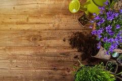 Ferramentas e plantas exteriores de jardinagem fotos de stock royalty free