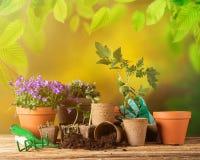 Ferramentas e plantas exteriores de jardinagem Imagem de Stock