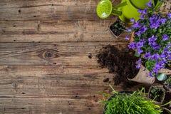 Ferramentas e plantas exteriores de jardinagem Foto de Stock
