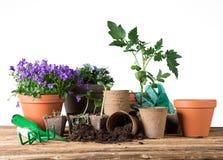 Ferramentas e plantas exteriores de jardinagem Foto de Stock Royalty Free