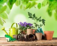 Ferramentas e plantas exteriores de jardinagem Imagens de Stock Royalty Free