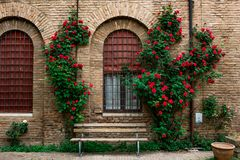 Ferrara, Emilia-Romagna, Italy. FERRARA, ITALY - May 01, 2018: rose garden in the courtyard of the museum of the Risorgimento and of the resistance, Ferrara stock photo