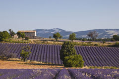 Ferrassieres lavender fields Royalty Free Stock Images