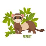 Ferret animal with wide open eyes in green leaves vector. Illustration isolated on white. Polecat toy for children with funny face, friendly pet playful weasel Stock Photo