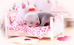 Ferret baby in doll house Royalty Free Stock Photos