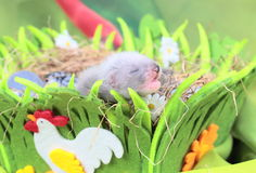 Ferret baby in the nest of hay Stock Image