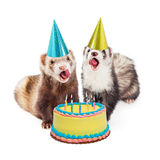 Ferret Birthday Party With Cake Stock Image