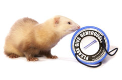 Ferret charity donations Stock Images