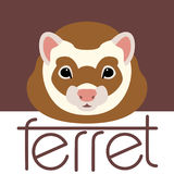 Ferret  face  front side vector illustration style. Flat Royalty Free Stock Images
