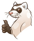Ferret gesturing thumb up. Vector cartoon funny ferret gesturing thumb up Royalty Free Stock Photography