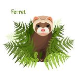 Ferret in green leaves of fern, polecat cute friendly animal. Vector illustration isolated on white. Endangered forest creature with short hair in tropic Royalty Free Stock Photo