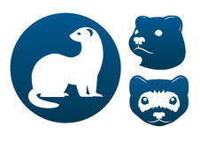 Ferret icons. Ferret blue vector signs on the white background