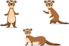 Ferret illustrations in different poses. Royalty Free Stock Photo