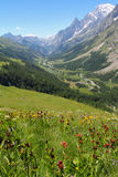Ferret Valley covered by flowers and Mont Blanc Royalty Free Stock Photography