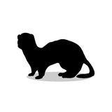 Ferret weasel ermine mammal black silhouette animal Stock Photos
