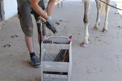 Ferrier change un fer du ` s de cheval et plante des clous dans le sabot images libres de droits