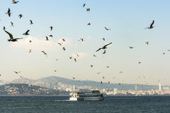 Ferries accompanied by seagulls floating in view of the Princes Royalty Free Stock Photo