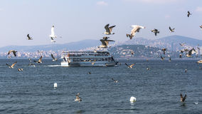 Ferries accompanied by seagulls floating in view of the Princes Stock Images