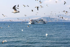 Ferries accompanied by seagulls floating in view of the Princes Royalty Free Stock Images
