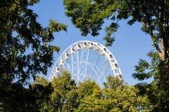 Ferris roda dentro as árvores Fotografia de Stock Royalty Free