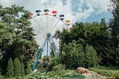 Ferris roda dentro o parque Adultos novos Foto de Stock