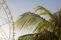 Ferris wheel and palm tree stock image