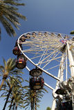 Ferris Wheel With Palm Trees royaltyfri foto