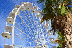 Ferris wheel and palm trees Royalty Free Stock Photos