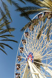 Ferris Wheel And Palm Trees Royalty Free Stock Photo