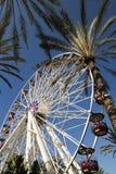 Ferris Wheel Surrounded vid palmträd Arkivbild