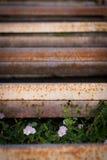 Ferro e flores oxidados Fotos de Stock