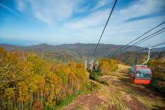 Ferrocarril aéreo a través de árboles del otoño imagen de archivo