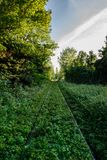 Ferrocarril abandonado en el bosque Imagenes de archivo