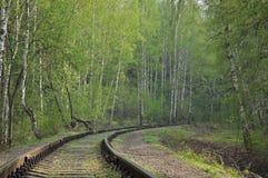 Ferrocarril en un bosque Imagen de archivo libre de regalías