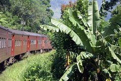 Ferrocarril, tren y plátanos Fotos de archivo