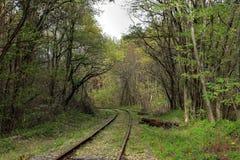 Ferrocarril vacío en bosque del otoño Fotografía de archivo
