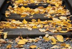 Ferrocarril viejo con las hojas caidas amarillas en el otoño Imagenes de archivo