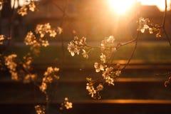 ferrocarril y el sol poniente foto de archivo libre de regalías