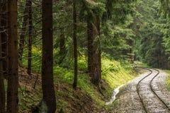 Ferrovia attraverso la foresta Fotografia Stock Libera da Diritti