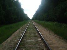 Ferrovia della foresta Immagini Stock