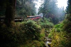 Ferrovia della foresta di Alishan Fotografia Stock Libera da Diritti