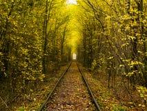 Ferrovia e foresta Fotografia Stock Libera da Diritti
