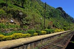 Ferrovia nei tropici Fotografia Stock