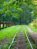 Ferrovia nella foresta Fotografie Stock Libere da Diritti
