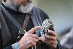 Ferruginous pygmy owl Royalty Free Stock Photos