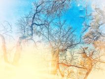 Ferry Forest Light Rays Snow White Trees Early Morning Royalty Free Stock Photos