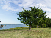 Ferry Landing. View of the Cape Fear River from the Fort Fisher Ferry Landing Stock Photos